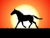 Silhouette d'un cheval courant sur le fond de coucher du soleil photographie stock libre de droits