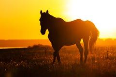 Silhouette d'un cheval dans le domaine au coucher du soleil Photographie stock libre de droits