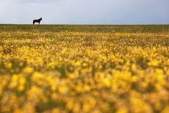 Silhouette d'un cheval sur l'horizon Photo libre de droits