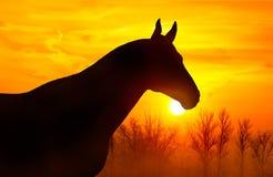 Silhouette d'un cheval sur un fond de ciel au coucher du soleil Photos libres de droits