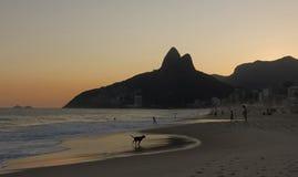 Silhouette d'un chien fonctionnant en plage d'Ipanema au coucher du soleil Photo stock