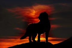Silhouette d'un chien sur la roche examinant la distance Photos libres de droits