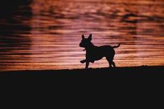 Silhouette d'un chien sur le fond de l'eau photo stock