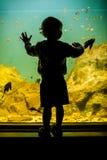Silhouette d'un garçon regardant des poissons photo libre de droits