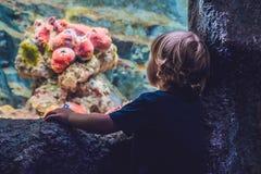 Silhouette d'un garçon regardant des poissons dans l'aquarium image libre de droits