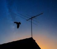 Silhouette d'un oiseau volant outre d'un toit image stock