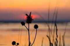Silhouette d'un papillon se reposant sur une fleur Images libres de droits