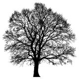 Silhouette d'un seul arbre Photos libres de droits