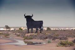 Silhouette d'un Taureau espagnol Photo libre de droits
