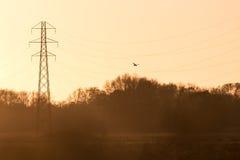 Silhouette d'un tinnunculus de Falco de rapace de faucon de crécerelle Photo libre de droits