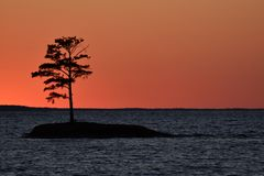 Silhouette d'une île d'arbre sur le coucher du soleil de lac Photographie stock