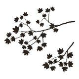 Silhouette d'une branche d'arbre sur un fond blanc Une branche d'un érable avec des feuilles Image stock