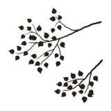 Silhouette d'une branche d'arbre sur un fond blanc Photographie stock