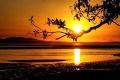 Silhouette d'une branche d'arbre Images stock