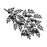 Silhouette d'une branche de sorbe sur un fond blanc Photographie stock