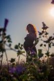 Silhouette d'une femme enceinte au coucher du soleil Image stock