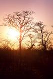 Silhouette d'une girafe pendant le coucher du soleil Photographie stock libre de droits