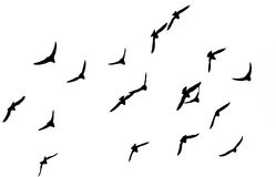Silhouette d'une volée des oiseaux Photos libres de droits