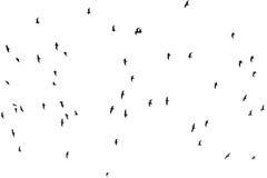 Silhouette d'une volée des oiseaux sur un fond blanc Photographie stock