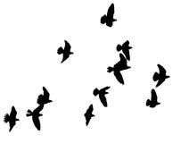 Silhouette d'une volée des oiseaux sur un fond blanc Photo libre de droits