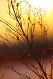 Silhouette d'usine sèche sur un coucher du soleil de fond Photos stock