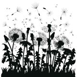 Silhouette of a dandelion with flying seeds. Black contour of a dandelion. Black and white illustration of a flower vector illustration