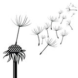 Silhouette of dandelion Stock Image