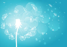 Silhouette dandelion with seeds on background Royalty Free Stock Photo