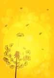 Silhouette dandelion with seeds on background Stock Photos