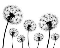 Silhouette of a dandelion. On a white background Royalty Free Stock Photos