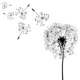 Silhouette of dandelion in wind Stock Photo