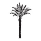 Silhouette of a date palm tree Stock Photo