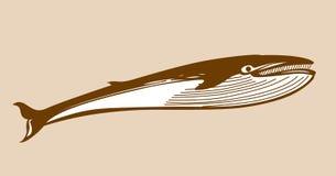 Silhouette de baleine illustration de vecteur