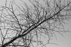 Silhouette de branche d'arbre d'isolement sur un fond blanc images stock