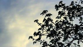 Silhouette de branche d'arbre sur le fond de ciel Ciel bleu et nuages blancs clips vidéos