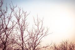 Silhouette de branche de feuilles avec le style de vintage Photographie stock libre de droits