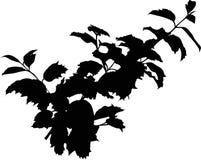 Silhouette de branchement d'arbre illustration de vecteur