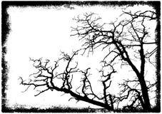 Silhouette de branchements d'arbre illustration stock