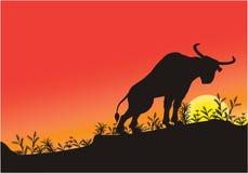 Silhouette de Bull Images libres de droits