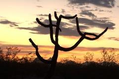 Silhouette de cactus Photographie stock libre de droits