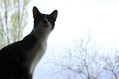 Silhouette de Cat Sitting On The Windowsill Chat Images libres de droits