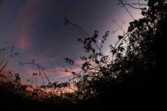 Silhouette de centrales Photographie stock libre de droits