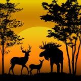 Silhouette de cerfs communs et d'orignaux Image stock