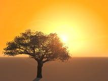 Silhouette de cerisier Images libres de droits