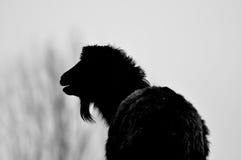 Silhouette de chèvre Photos libres de droits