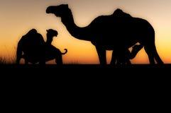 Silhouette de chameau Images libres de droits