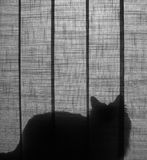 Silhouette de chat Photographie stock libre de droits