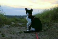 Silhouette de chat au coucher du soleil Chat mignon sur la route, fond de coucher du soleil, regard de chat Photo stock