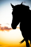 Silhouette de cheval Photographie stock