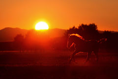 Silhouette de cheval Photos stock